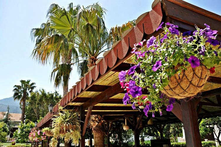 The Authentic Pergola