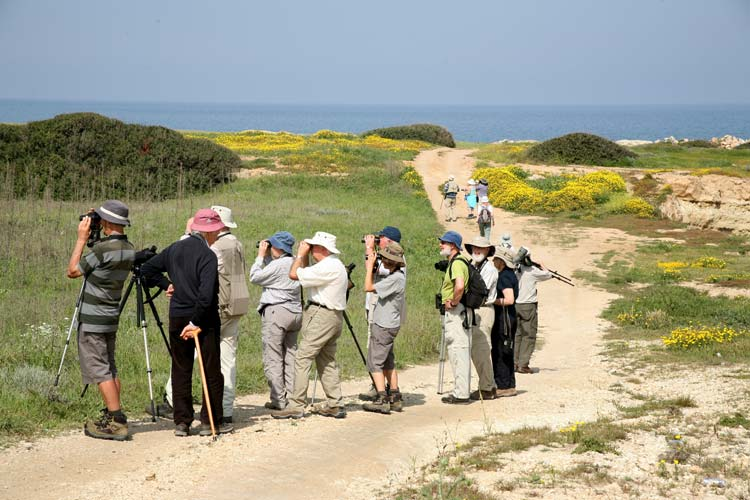 North Cyprus Bird Watching